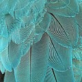 Turquoise Blue Feathers by Sabrina L Ryan
