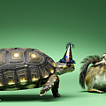 Turtle And Chipmunk Wearing Party Hats by Jeffrey Hamilton