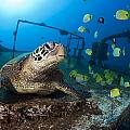 Turtle And Sealife by Dave Fleetham - Printscapes