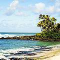Turtle Beach by Jama Pantel