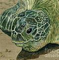 Turtle Beach by Norma Gafford