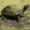 Turtle Camouflage by Christiane Schulze Art And Photography