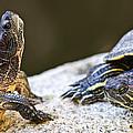 Turtle Conversation by Elena Elisseeva