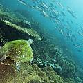 Turtle Eye View by Freund Gloria
