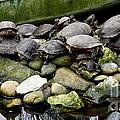 Turtle Island by Lainie Wrightson