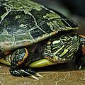 Turtle Neck by LeeAnn McLaneGoetz McLaneGoetzStudioLLCcom