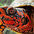 Turtle Smile by Debbie Portwood