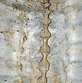 Turtle Spine by LeeAnn McLaneGoetz McLaneGoetzStudioLLCcom