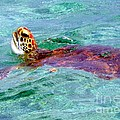 Turtle Time  by Karen Wiles