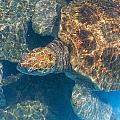 Turtle Underwater,high Angle View by Axiom Photographic
