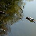 Turtles On The Pond by Dennis Pintoski