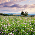 Tuscany Flowers by Brian Jannsen