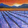 Tuscany Lavender Field by Vesna Antic