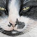 Tuxedo Cat by Svetlana Ledneva-Schukina