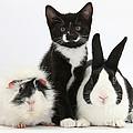 Tuxedo Kitten With Black Dutch Rabbit by Mark Taylor