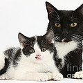 Tuxedo Mother Cat And Kitten by Mark Taylor