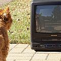 Tv Watching Dog by Susan Stone