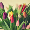 Twenty Colorful Tulips by Photo by Ira Heuvelman-Dobrolyubova