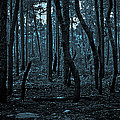 Twilight In The Smouldering Forest by DigiArt Diaries by Vicky B Fuller