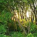 Twilight In The Woods by Anna Villarreal Garbis