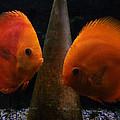 Twin Friends Malboro Fish  by Colette V Hera  Guggenheim