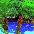 Twin Palms 2 by Nina Kaye