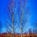 Twin Trees At South Platte Park by David Patterson