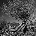 Twisted Beauty - Bw by Christopher Holmes
