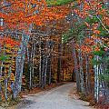 Twisting Road Of Fall by Lloyd Alexander