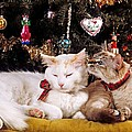 Two Cats At Christmas by Larry Allan