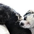 Two Cute by Larry Ricker