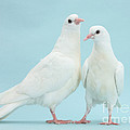 Two Doves by Mark Taylor