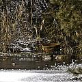 Two Ducks And A Tub by LeeAnn McLaneGoetz McLaneGoetzStudioLLCcom