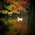Two Ducks by Michael L Kimble