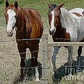 Two Friends by Bobbylee Farrier