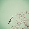 Two Geese Migrating by Laura Ruth