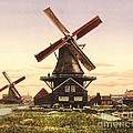 Two Holland Windmills by Padre Art