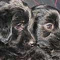 Two Matched Pups by Mel White  Photo