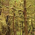 Waltzing In The Rainforest by Carol Groenen