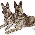 Two Of A Kind - German Shepherd Dogs Print Color Tinted by Kelli Swan