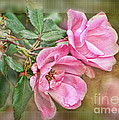 Two Pink Roses II Blank Greeting Card by Debbie Portwood