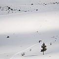Two Skiers Climb A Hill To Ski Fresh by Michael S. Lewis