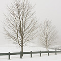 Two Trees And Fence In Winter Fog by Keith Webber Jr