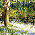 Sunlit Bluebells Llanina Ceredigion by Edward McNaught-Davis