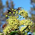 Two Wasps And A Bee by Will Borden