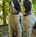 Two Wet Puppies by Steve Harrington