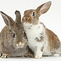 Two Young Rabbits by Mark Taylor