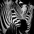 Two Zebras by C Thomas Willard