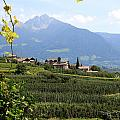Tyrolean Alps And Vineyard by Christiane Schulze Art And Photography