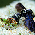 Ugly Bug Feast 2 by Bill Pevlor